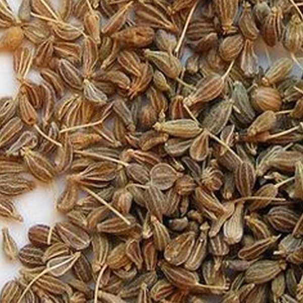 anis ægte pimpinella anisum